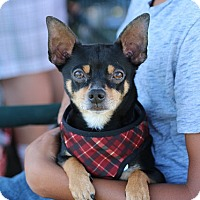 Adopt A Pet :: Spencer - Fountain Valley, CA