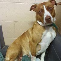 Adopt A Pet :: Tootsie - Yreka, CA