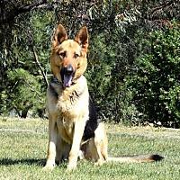 Adopt A Pet :: Linus - San Diego, CA