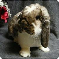 Adopt A Pet :: Bennett - Newport, DE