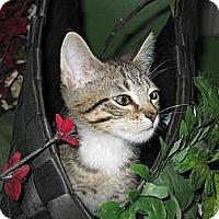 Adopt A Pet :: Hostess - Clearfield, UT