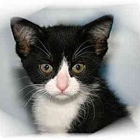 Adopt A Pet :: Kerry - Montgomery, IL