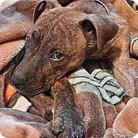 Adopt A Pet :: Monty - Cleveland, OH