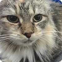 Adopt A Pet :: Joy - Harrisburg, NC