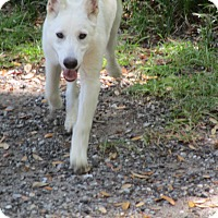 Adopt A Pet :: Angel - Green Cove Springs, FL