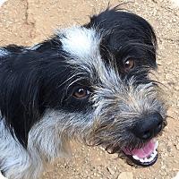 Adopt A Pet :: Skeeter - Spring Valley, NY