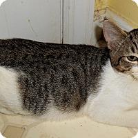 Adopt A Pet :: Jo - Chattanooga, TN