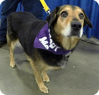Hound (Unknown Type)/Shepherd (Unknown Type) Mix Dog for adoption in Detroit, Michigan - Ladybird-Adopted!