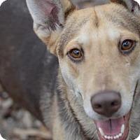 Adopt A Pet :: Sugar - Orlando, FL