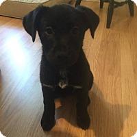 Adopt A Pet :: Haddie - chicago, IL