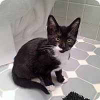 Adopt A Pet :: Perdita - River Edge, NJ