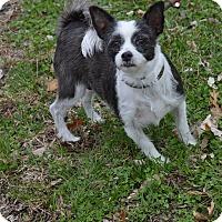 Adopt A Pet :: FeFe - Cokato, MN