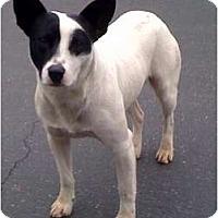 Adopt A Pet :: KC - Fowler, CA