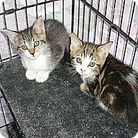 Adopt A Pet :: Kittens2 - lake elsinore, CA