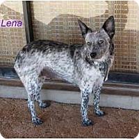Adopt A Pet :: Lena - Phoenix, AZ