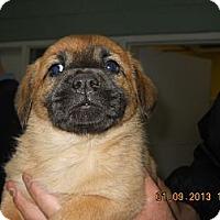 Adopt A Pet :: Asia - South Jersey, NJ