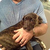 Adopt A Pet :: Carrie - Washington, NC