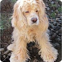 Adopt A Pet :: Ashley - Tacoma, WA