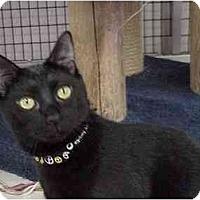 Adopt A Pet :: Miles - Deerfield Beach, FL