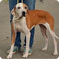 Adopt A Pet :: Momma - Hamilton, ON