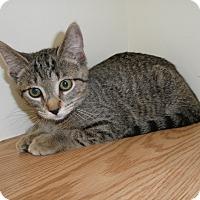 Adopt A Pet :: Urbania - Milwaukee, WI