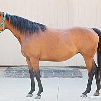 Adopt A Pet :: Tilly - El Dorado Hills, CA