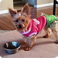 Adopt A Pet :: Lilly - Canton, IL