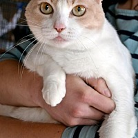 Adopt A Pet :: Bess - Johnson City, TN