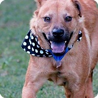 Adopt A Pet :: Max in CT - Manchester, CT