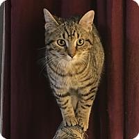 Adopt A Pet :: Daisy - Covington, KY