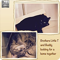 Adopt A Pet :: Little T - Washington, PA