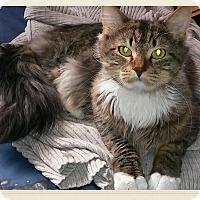 Adopt A Pet :: Soul - Acushnet, MA