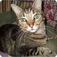 Adopt A Pet :: Elvis Quinley - Fort Lauderdale, FL