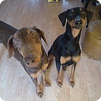 Adopt A Pet :: Raven - Allegan, MI