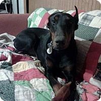 Adopt A Pet :: Callie--pending - New Richmond, OH