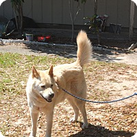 Adopt A Pet :: Dudley - Pensacola, FL
