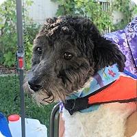 Adopt A Pet :: Harley - Ogden, UT
