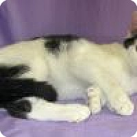 Adopt A Pet :: Hattie - Powell, OH