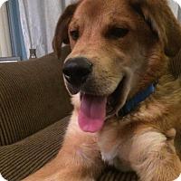 Adopt A Pet :: Ramsey - Pitt Meadows, BC