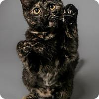 Adopt A Pet :: Sophia - Atlantic, NC
