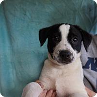Adopt A Pet :: Gunner - Oviedo, FL