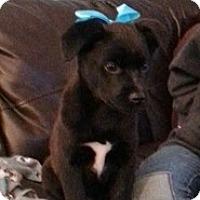 Adopt A Pet :: Ella - Marlton, NJ