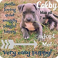 Adopt A Pet :: Colby - Dearborn, MI