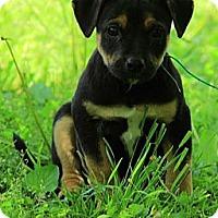 Adopt A Pet :: Murphy - Staunton, VA
