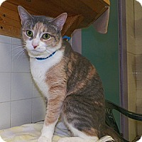Adopt A Pet :: Butter - Dover, OH