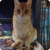 Adopt A Pet :: Pekoe - Sunderland, ON