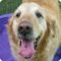 Adopt A Pet :: Lady - Denver, CO