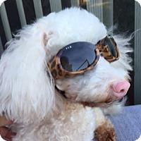 Adopt A Pet :: Addie - La Costa, CA