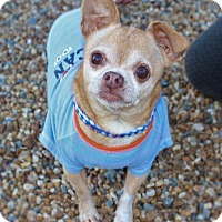 Adopt A Pet :: Gizmo - Fort Valley, GA