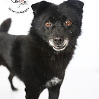 Adopt A Pet :: JO - Sherman Oaks, CA